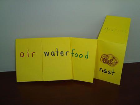 Basic needs of animals cute song-kindergarten basic needs of living things