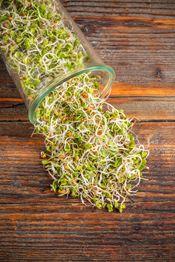 Comment utiliser les graines germées au quotidien ? Quel matériel ? Quelles graines pour quelles durées de trempage, de germination ? Où et comment les utiliser au quotidien ? Guide et conseils pou…