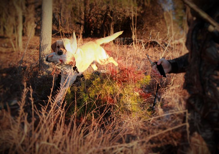 First shot of the morning, Hoss bringing it home!