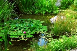 build your own swimming islands for water plants