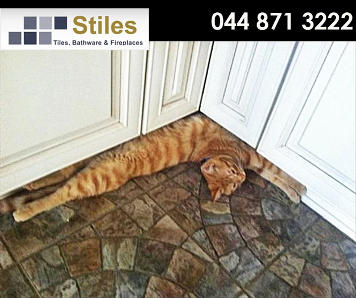 No, I am not part of the floor. Rather come pop in at #Stiles for our exclusive range of beautiful flooring from #Kronotex. Wishing everyone a lovely Friday! #FridayFunny