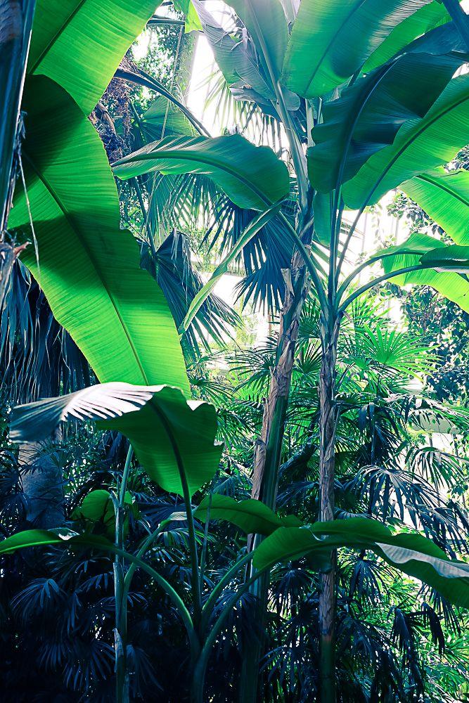 Les 25 meilleures id es de la cat gorie feuilles for Plante jungle