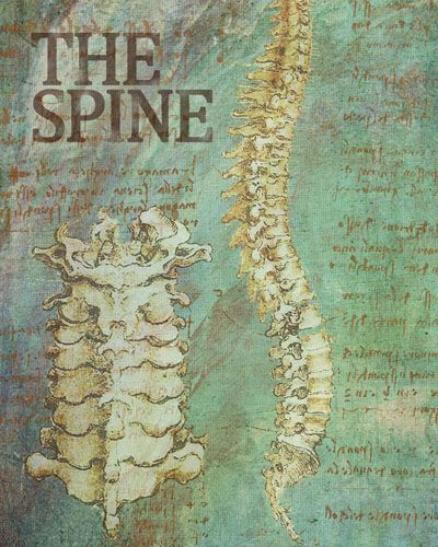 1000+ Images About Chiropractic Care On Pinterest