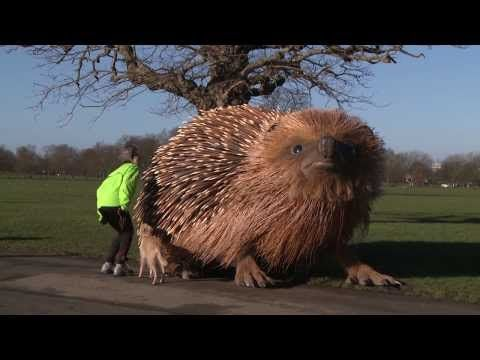 Sir David Attenborough and giant hedgehog launch new TV show Natural Curiosities - YouTube