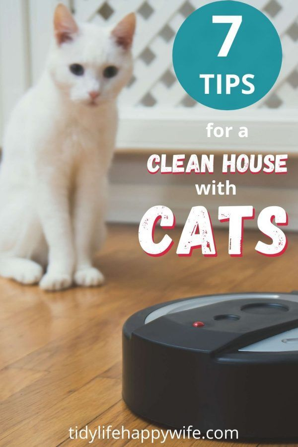 How To Keep Your House Clean With Cats Cat Cleaning Clean House Cleaning