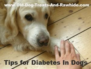 Naturally helping dogs with diabetes - your dog may be able to do without insulin injections...