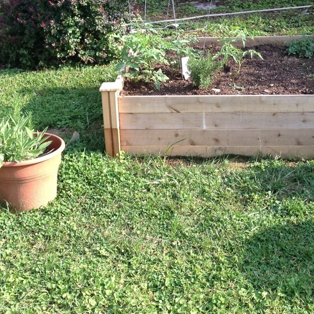 My First Raised Bed And Herb Garden