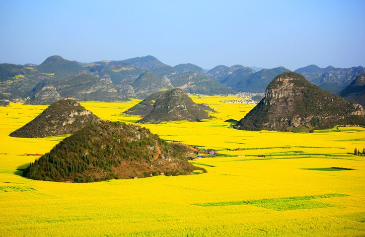 Mother nature spent a little extra time on these beautiful locations. Yellow canola flowers in Luoping, China