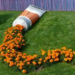 A Tube of Orange Paint Leaks Marigolds in a Public Park in France