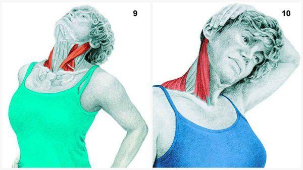 estiramientos musculares cuello flexiones