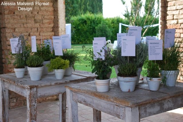 piante aromatiche | Piante, Floreale