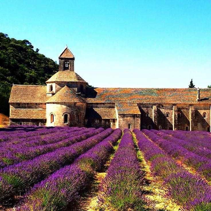 L'Abbaye et L'avande - Senanque Abbey, Provence, France