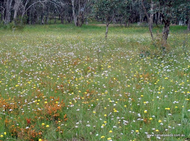Native grass and flowers restoring beauty after bushfires