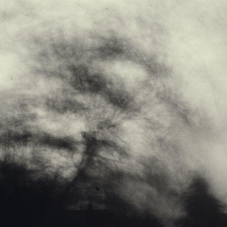 Tina Lynge - Trees of Marking