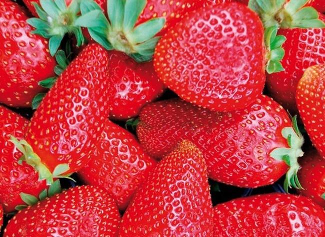 Les meilleures variétés de fraises http://www.rustica.fr/articles-jardin/fruits-et-verger/meilleures-varietes-fraises,3933.html