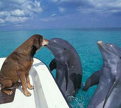 """Watch this dog talking to dolphins! They use ESP, communicate by feelings. """"Hey guys, you look happy to see me?"""" <3"""
