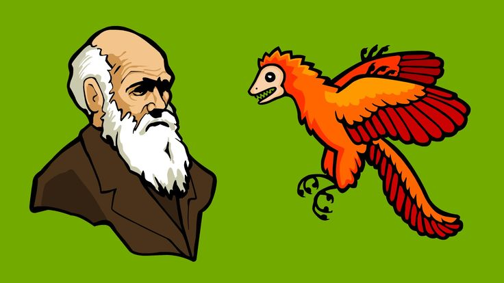 What is Evolution? by Stated Clearly