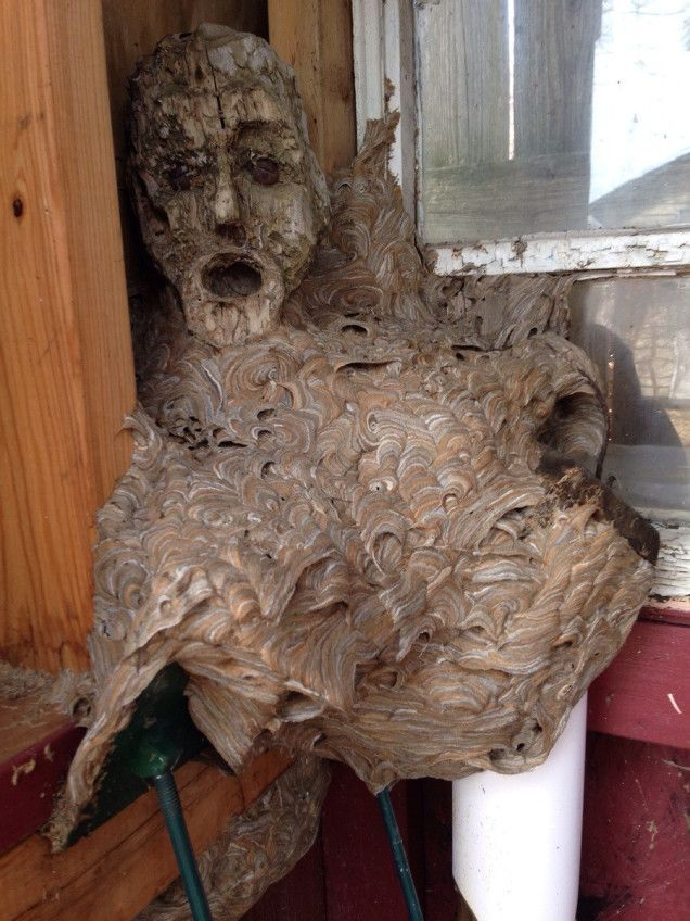 """An abandoned hornet's nest my dad found in his shed that he hadn't been in for a couple years. The head is apart of a wooden statue it fuse..."