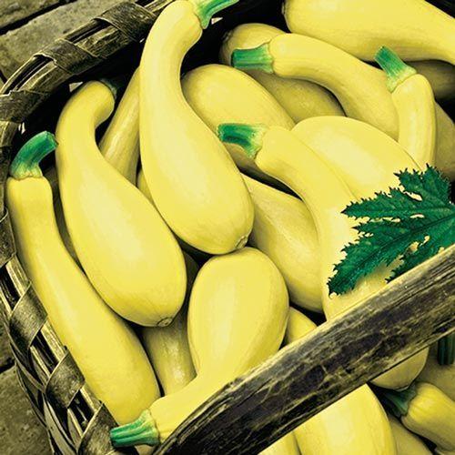 Dixie Yellow Crookneck Summer Squash | Gurney's Seed & Nursery