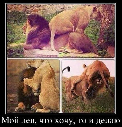 Письмо «Пользователь Алена Морилова подписался на ваши обновления в Pinterest» — Pinterest — Яндекс.Почта