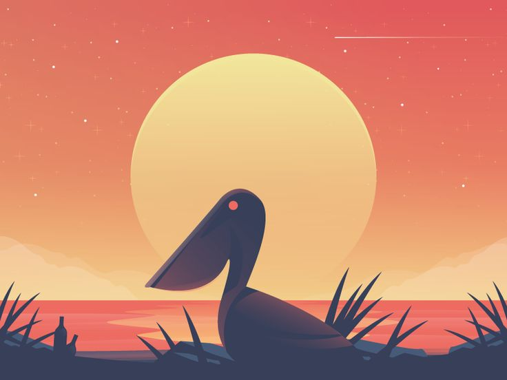 Pelican by Nick Slater #illustration
