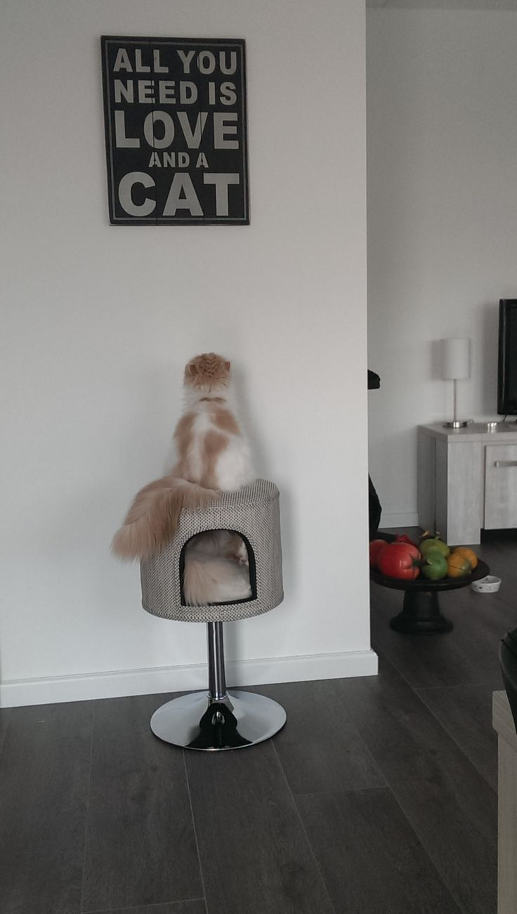 Yep.:-) #cats