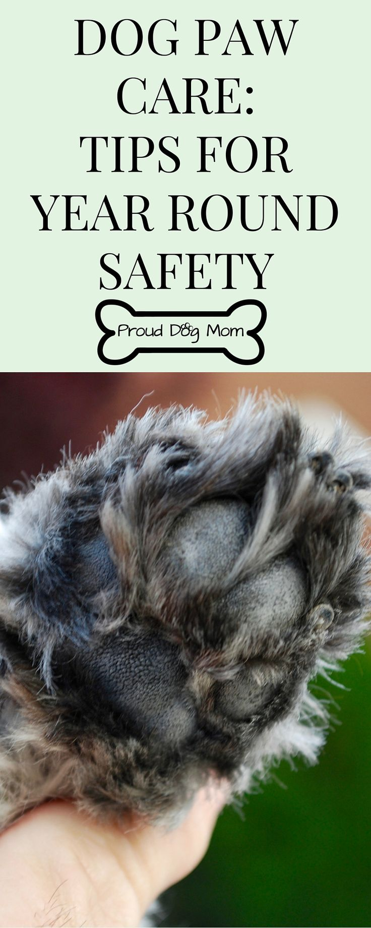 Dog Paw Care: Tips For Year Round Safety   Dog Health Tips   Dog Grooming Tips  
