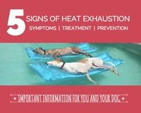 5 Signs of Heat Exhaustion in Dogs | If It Barks