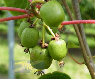 KIWIBES ! Ecoflora, Ecologische kwekerij en tuinwinkel