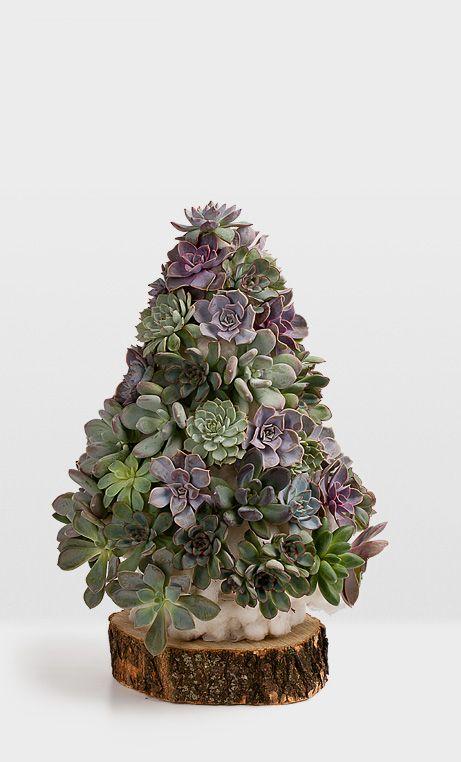 Succulent Christmas Tree Planties Pinterest