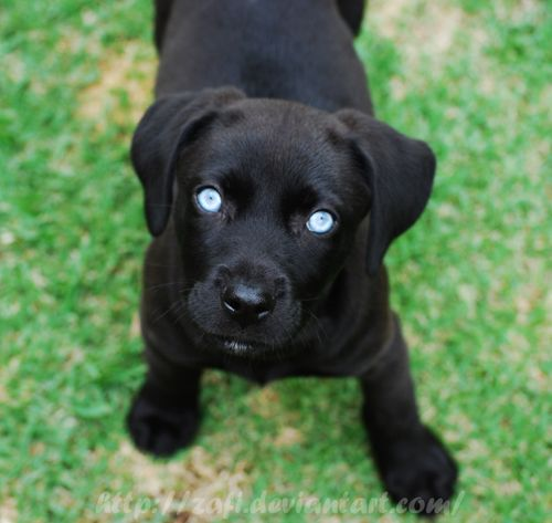 how to raise a one eyed dog