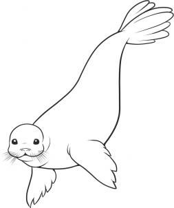How to Draw a Seal, Step by Step, Sea animals, Animals, FREE Online Drawing Tutorial, Added by Dawn, December 19, 2007, 12:52:30 am