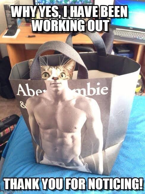 Cat workout photo bomb