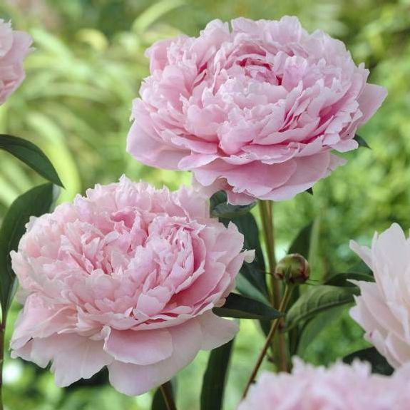 Most Popular Flowers 46 best popular flower types images on pinterest | flower types