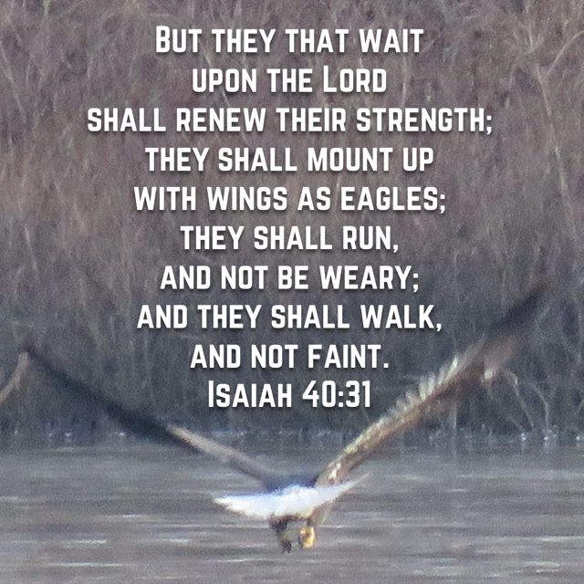 Religious Clip Art Eagle Shirt Eagle Png Upon The LORD Shall Renew Their Strength But They That Wait Isaiah 40 31 Transparent Png