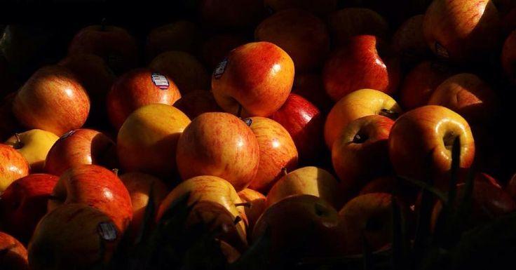Conservation des pommes pour une longue durée. Les pommes se conservent plusieurs semaines au frigo, mais si vous souhaitez les garder encore plus longtemps que ça [..]vous pouvez les envelopper individuellement dans du papier journal, puis les empiler [...] Attention toutefois de ne pas entreposer les pommes au même endroit que des pommes de terre, à cause du gaz émis par ces dernières.