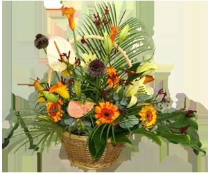 A warm and bright exotic style basket with a mix of cala, gerbera, anthurium and kangaroo paw. A perfect gift for brightening up someone's day.