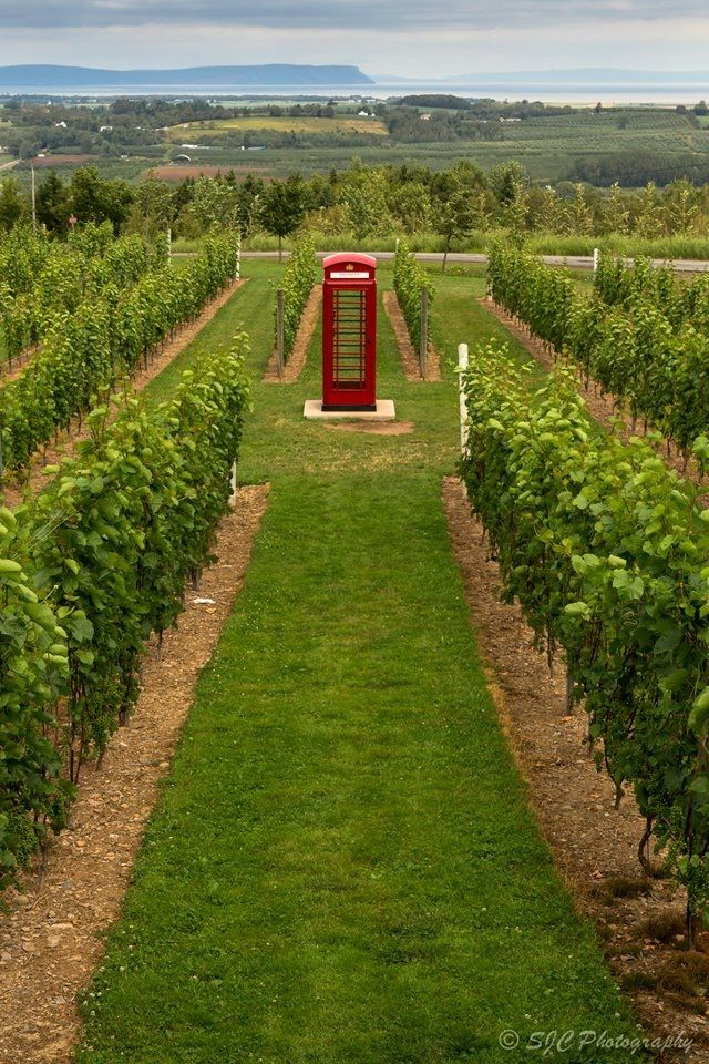Authentic Phone Booth, Luckett Vineyards, Grand Pré, Annapolis Valley NS - by Stephen Chéné