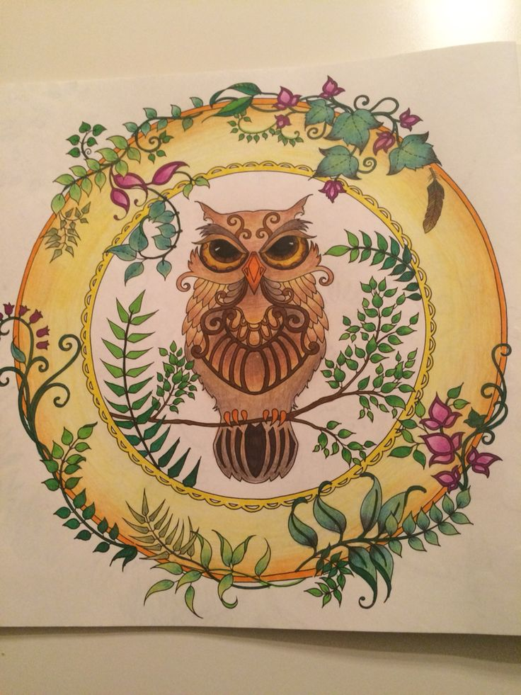 Enchanted forest - owl