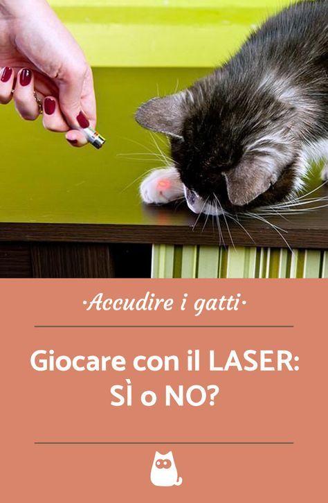Giocare Con Il Laser Con Il Gatto Può Fargli Male Miaoooo Cats