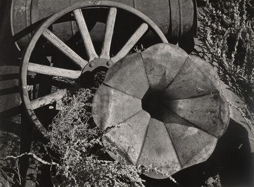 Ansel Adams. Desert Flower. 1937