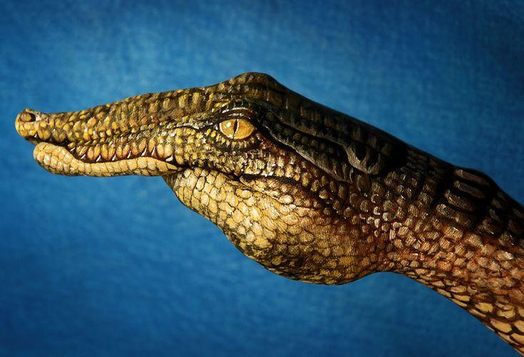Optische illusies in het dierenrijk | Paradijsvogels Magazine