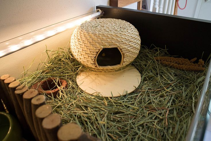 DIY hutch on deep substrate with meadow grass hay