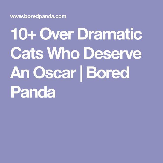 10+ Over Dramatic Cats Who Deserve An Oscar   Bored Panda
