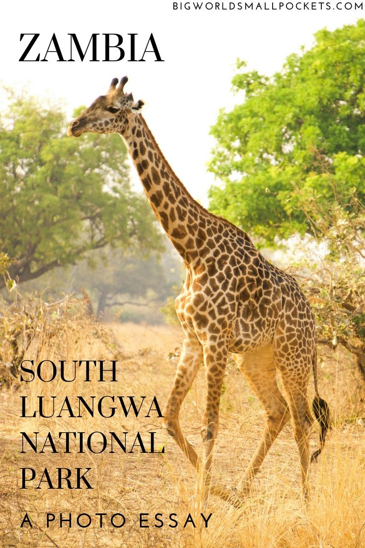 An African Safari In South Luangwa National Park Zambia Africa Travel Destinations Essay About American History Child