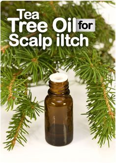 Get Rid of Itchy Scalp and Dandruff With Tea Tree Oil. Dry, Flaky, Oily, Itchy Scalp Treatment