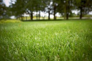 Lime can provide optimal soil conditions for growing a healthy lawn.