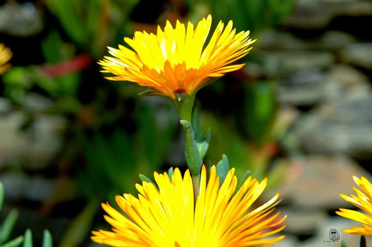 L'AUCA DE L'ANNA: Les flors del meu jardí
