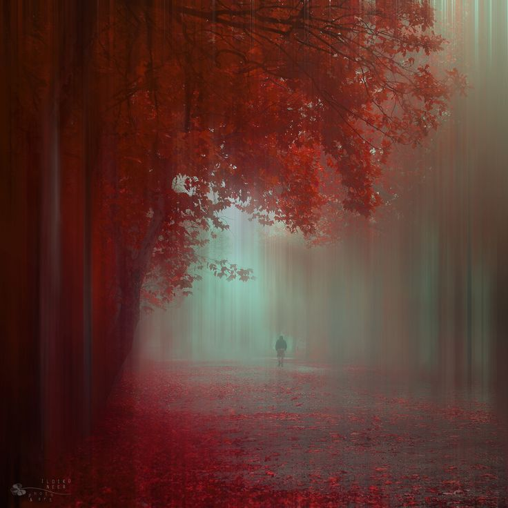 Where do you go? by Ildiko Neer