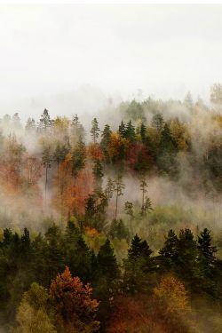 Fog by Jan Kvasnicka